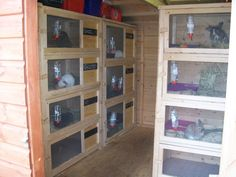 Hutch Rabbit Shed Related Keywords & Suggestions - Hutch Rabbit Shed Long Tail Keywords