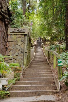 The Dipsea Trail in Marin County, California