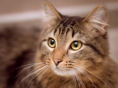 It takes talent to understand cats Pet Photography Tips, Animal Photography, Cat Expressions, Mean Cat, Cat Whisperer, Owning A Cat, Ravenna, Cat Gif, Four Legged