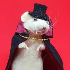 Pet Store, Taxidermy, Dracula, Guinea Pigs, How To Take Photos, Reptiles, Squirrel, Rabbit, Character Design