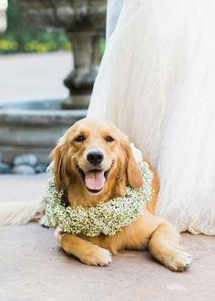 Wedding pup garland #weddingdog @weddingchicks
