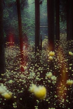 I am a forest, and a night of dark trees: but he who is not afraid of my darkness, will find banks full of roses under my cypresses. | Friedrich Nietzsche |