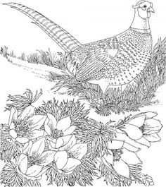 Ring Necked Pheasant And American Pasque South Dakota Bird Flower Coloring Page From Pheasants Category Find This Pin More