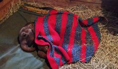 Please sponsor an orphan baby elephant at the David Sheldrick Wildlife Trust *~❤•❦•:*´`*:•❦•❤~* http://www.sheldrickwildlifetrust.org/asp/fostering.asp
