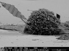 C'est l'histoire d'une bio nano sonde quantique