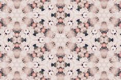 The native New Zealand/ Aotearoa Manuka Flower as a Mandala. Kiwiana, Spiritual Practices, Flower Mandala, Beauty Photos, Image Now, Fine Art Photography, Printable Art, Royalty Free Stock Photos, Pure Products