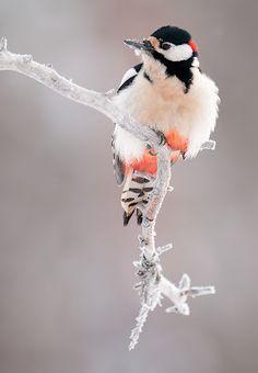 beautiful bird perching on white branch