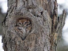 Natures Doorways - wanderthewood: Master of disguise - Eastern...