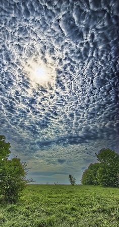 Amazing Clouds---an extraordinary example of mammatus clouds lit from above.