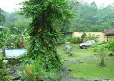 Objektbeschreibung:  Auswandern nach Costa-Rica liegt im Trend, doch nicht immer findet sich eine passende Finca oder Anwesen.  Um es Ihnen beim Auswandern leicht zu machen, steht meine Finca inkl. Mobiliar und sogar einem Pickup-Truck so wie Sie es auf den Bildern sehen können zum Verkauf.