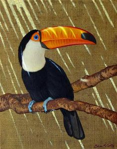 Toco Toucan All sizes Bird Drawings, Animal Drawings, Toco Toucan, Garden Mural, Jungle Animals, Rainforest Animals, Tropical Birds, Wildlife Art, Animal Paintings