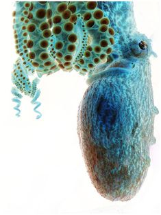 Octopus!  In:  Smithsonian Magazine Announces 9th Annual Photo Contest Finalists