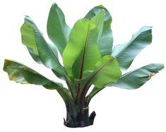 Resultado de imagen para tropical plant texture
