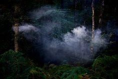 Ellie Davies - 'Between the Trees'