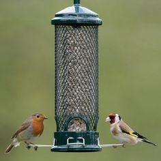 Squirrel Buster Mini bird seed feeder