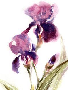 Lámina acuarela iris púrpura Fina lámina de pintura acuarela Acuarela arte de la pared Tema de color: púrpura, verde  Arte de calidad profesional