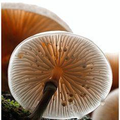 I don't even like mushrooms