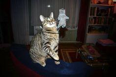 What the hell?! A flying gerbil ♡  #cats #katzen #neko #pets #haustiere   http://kaninchenfanlucky-meinkaninchenloch.blogspot.de/2014/02/what-hell-flying-gerbil.html