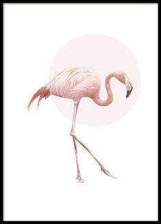A poster of a beautiful pink flamingo with a white background. Print of a flamingo. Above the flamingo is a light pink circle that completes the motif. A very stylish poster for either a modern or retro decor. Wall Prints, Poster Prints, Buy Prints, Poster Wall, Gold Poster, Wal Art, Animal Posters, Art Posters, Online Posters