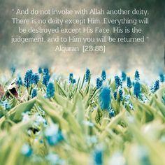 #islam #Muslims #Quran #Mohammed  #اسلام #آيه #مسلم #قران