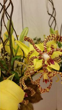 Flores & Camuflagem