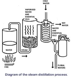 How to Make Essential Oils: Making Essential Oils – Steam Distillation, and Absolutes ~ a GREAT site to show the distillation process. Using a canner pot, you can do the same process! Essential Oil Still, Making Essential Oils, Essential Oil Blends, Making Oils, Destilar Alcohol, Essential Oil Distiller, Steam Distillation, How To Make Oil, Medicinal Herbs