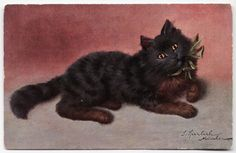 Vintage Artist Signed by SPERLICH Black Persian Cat with Green Bow Postcard 1908 Sperlich | eBay
