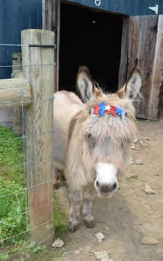 Jean Paul Jones ~ Only Donkeys - Happy 4th! ❤️🇺🇸❤️