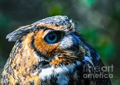 "Please click on the tiny image in the left top corner to enlarge ""Great Horned Owl"" and receive complete details.  Sorry for the error caused by Pinterest regarding the tiny image displayed.  Bill"