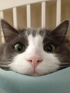 """Are you awake yet?"""
