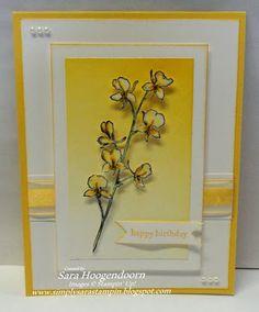 Simply Sara Stampin': Happy Watercolor Birthday
