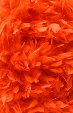 Delicate and fluffy feathers Orange Rose Orange, Jaune Orange, Burnt Orange, Orange Color, Orange Red, Orange Twist, Orange Juice, Orange Aesthetic, Aesthetic Colors