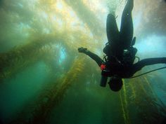 Kelp diving with the Scuba Diver Girls!!