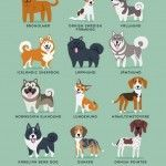 Nordic Dogs