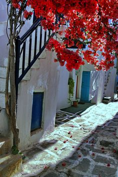 Alley with bougainvillea in Naoussa, Paros island, Cyclades, Aegean_ Greece