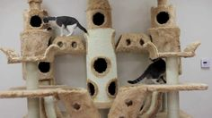 Buckingham Palace Cat Tree by Kitty Mansions, via YouTube.