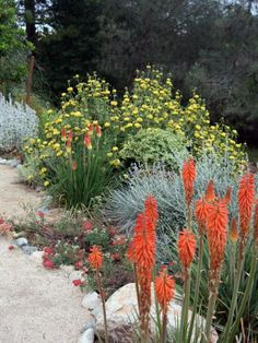A Xeriscaped sustainable driveway is surrounded with Jerusalem sage and red-hot poker, which add pops of red and yellow color. Design by Katrina Fairchild