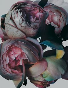 Unreal colored roses | Nick Knight > http://nickknight.com/