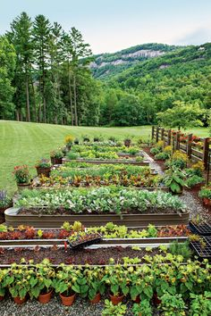 Spring garden season is right around the corner, and the experts at Southern Living are offering their advice on everything from the basics to the best Garden Cottage, Garden Beds, Garden Table, Farm Gardens, Outdoor Gardens, Outdoor Ponds, House Gardens, Cerca Natural, Vegetable Garden Design