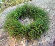 tie a wreath of common hair moss