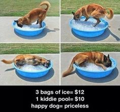 To keep your pets cool this summer try filling a kiddy pool with water for them and on really hot days try some ice! Monitor very closely if this is performed!