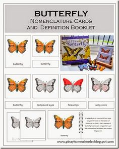 FREE Butterfly Nomenclature and Definition Cards