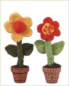 Neue Züchtung: Die Filzonie, auch Wollblümchen genannt, garantiert dauerblühend, schädlingsresistent und gießfrei.