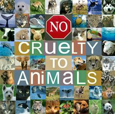 No creature on this good earth deserves to be harmed in any way.