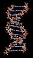 Animación de la estructura del ADN.