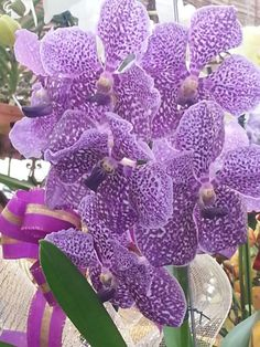Orchidea! The most beautiful I've seen!