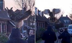 Hilarious moment enormous bird of prey lands on birdwatcher's head
