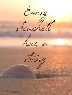 Every seashell has a story. Create your stories at the beach. Visit Inn at the Beach in Venice, Florida Beach Bum, Ocean Beach, Summer Beach, Beach Walk, Beach Vibes, Ocean Quotes, Beach Quotes And Sayings, Quotes Quotes, Beach Qoutes