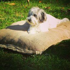 ourangelsbed.blogspot.com  shop online de camas para perros dog  bed, llits per gossos. coixins per casa Bed, Animals, Houses, Pets, Clothing, Animales, Stream Bed, Animaux, Animal