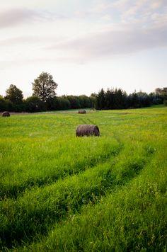 © 2012 Viviane Perenyi - Őrség Meadow Hungary Schengen Area, Rolling Meadows, Green Fields, Central Europe, Green Gables, Life Is Beautiful, Hungary, Croatia, Countryside